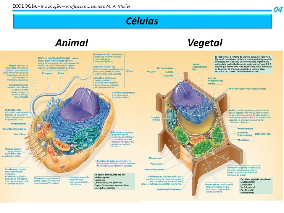 Células Animal Vegetal 04