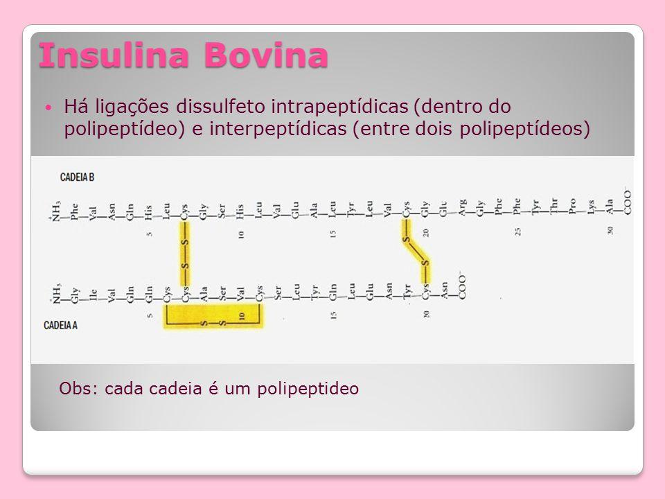Insulina Bovina Há ligações dissulfeto intrapeptídicas (dentro do polipeptídeo) e interpeptídicas (entre dois polipeptídeos)