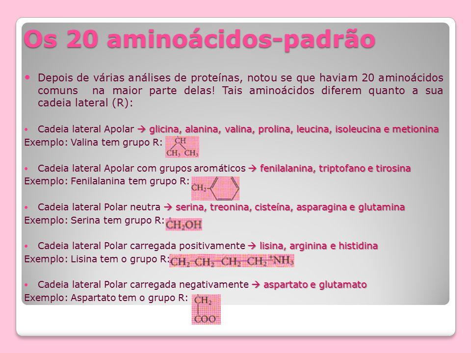 Os 20 aminoácidos-padrão
