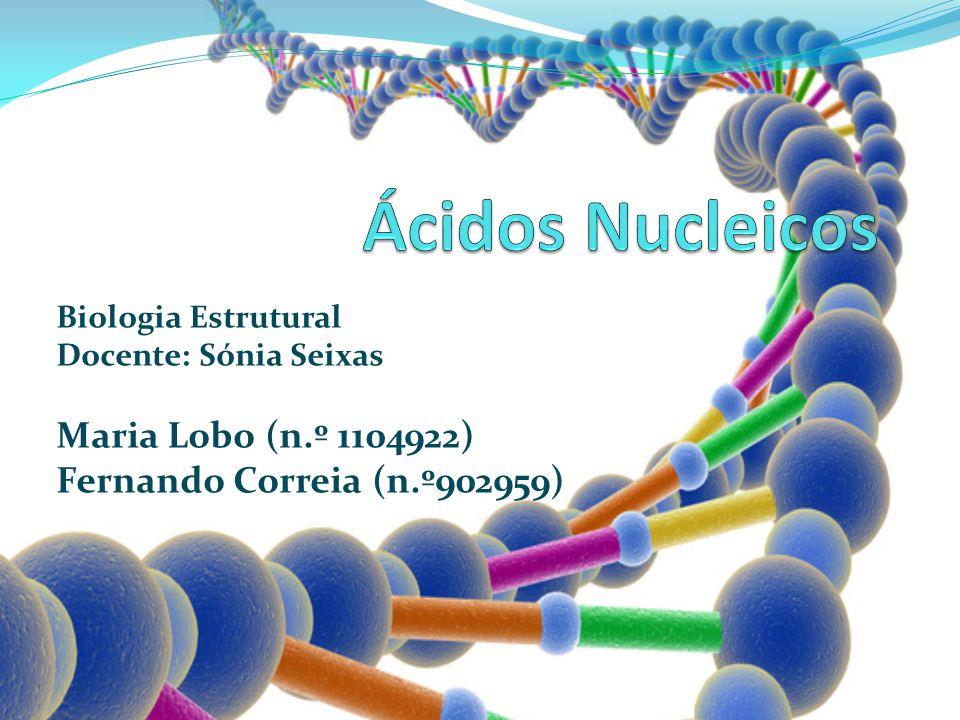 Ácidos Nucleicos Maria Lobo (n.º 1104922) Fernando Correia (n.º902959)