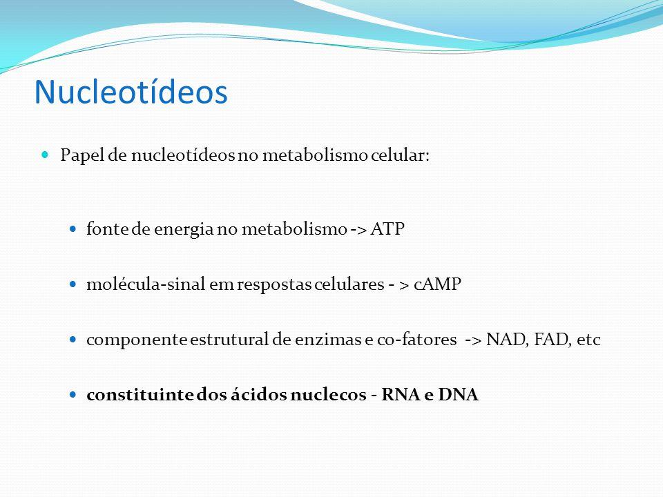Nucleotídeos Papel de nucleotídeos no metabolismo celular: