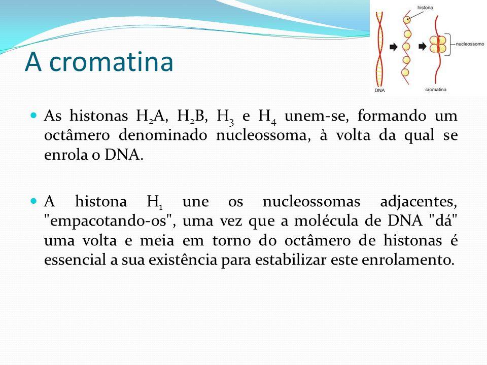A cromatina As histonas H2A, H2B, H3 e H4 unem-se, formando um octâmero denominado nucleossoma, à volta da qual se enrola o DNA.