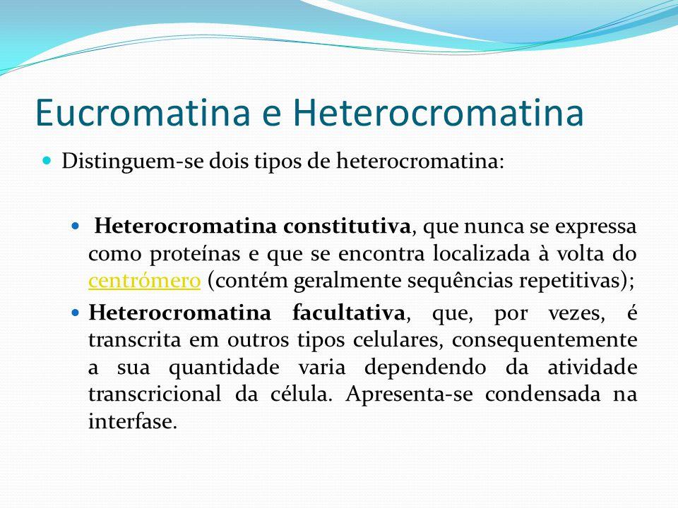 Eucromatina e Heterocromatina