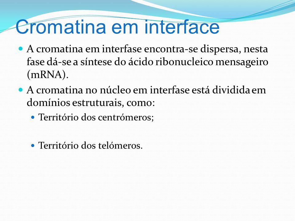 Cromatina em interface