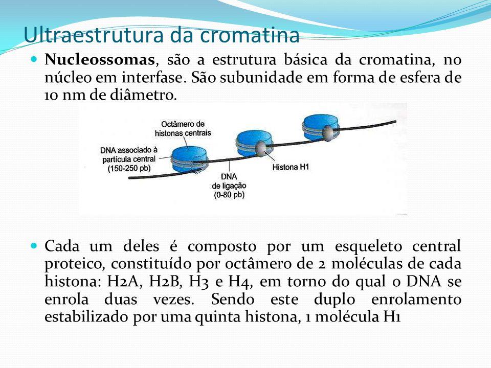 Ultraestrutura da cromatina