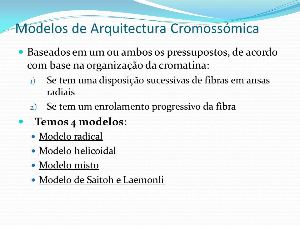 Modelos de Arquitectura Cromossómica