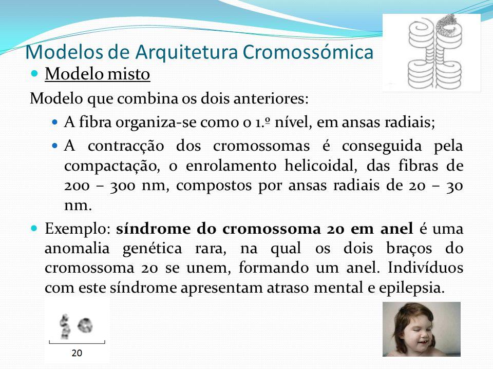 Modelos de Arquitetura Cromossómica