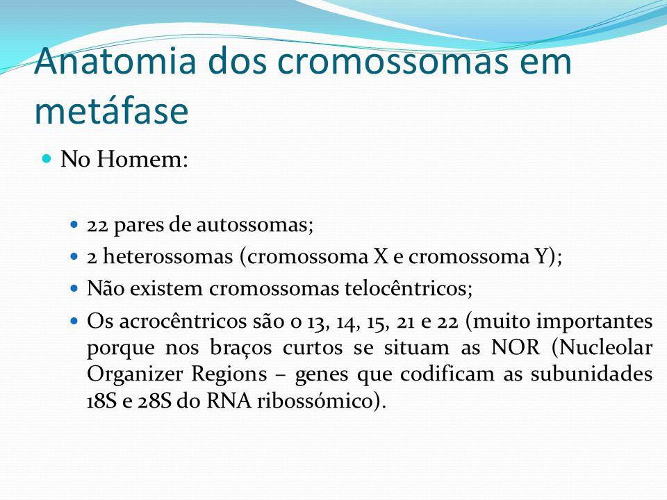 Anatomia dos cromossomas em metáfase
