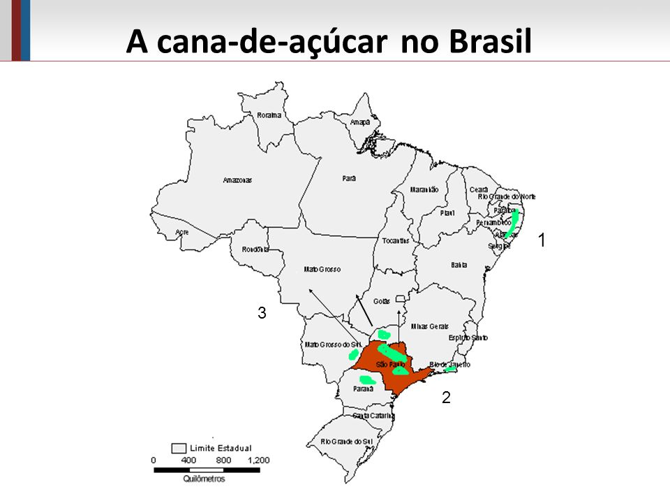 A cana-de-açúcar no Brasil