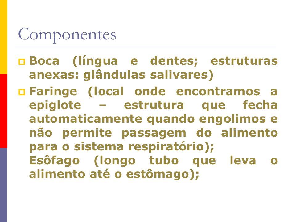 Componentes Boca (língua e dentes; estruturas anexas: glândulas salivares)