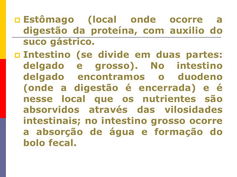 Estômago (local onde ocorre a digestão da proteína, com auxilio do suco gástrico.