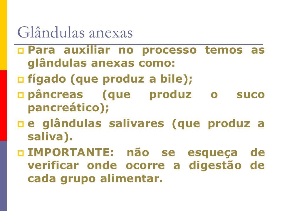 Glândulas anexas Para auxiliar no processo temos as glândulas anexas como: fígado (que produz a bile);