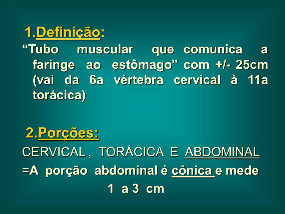 1.Definição: Tubo muscular que comunica a faringe ao estômago com +/- 25cm (vai da 6a vértebra cervical à 11a torácica)