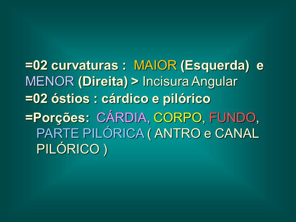 =02 curvaturas : MAIOR (Esquerda) e MENOR (Direita) > Incisura Angular