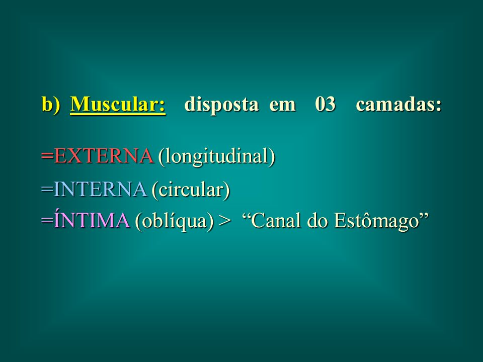 b) Muscular: disposta em 03 camadas: =EXTERNA (longitudinal)