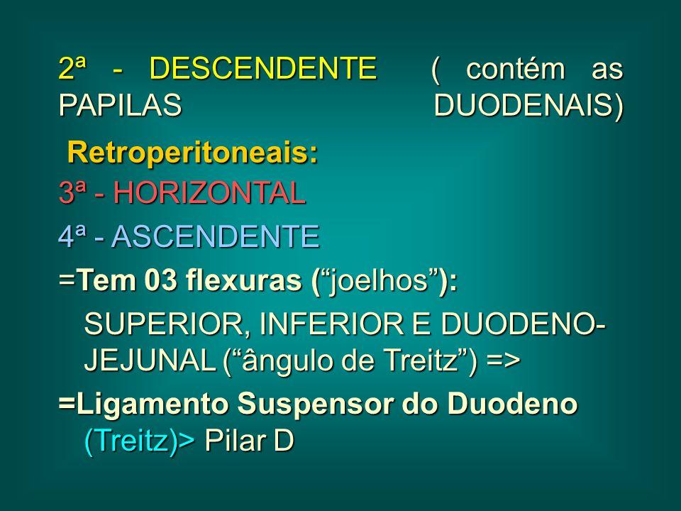 2ª - DESCENDENTE ( contém as PAPILAS DUODENAIS) Retroperitoneais: