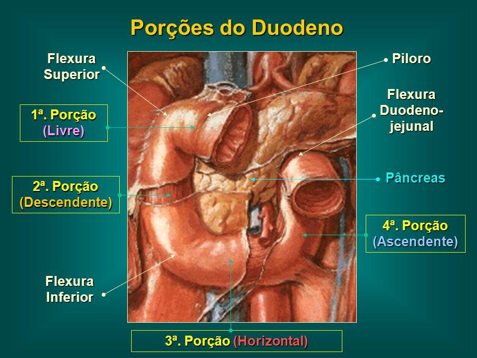 Flexura Duodeno-jejunal 2ª. Porção (Descendente)