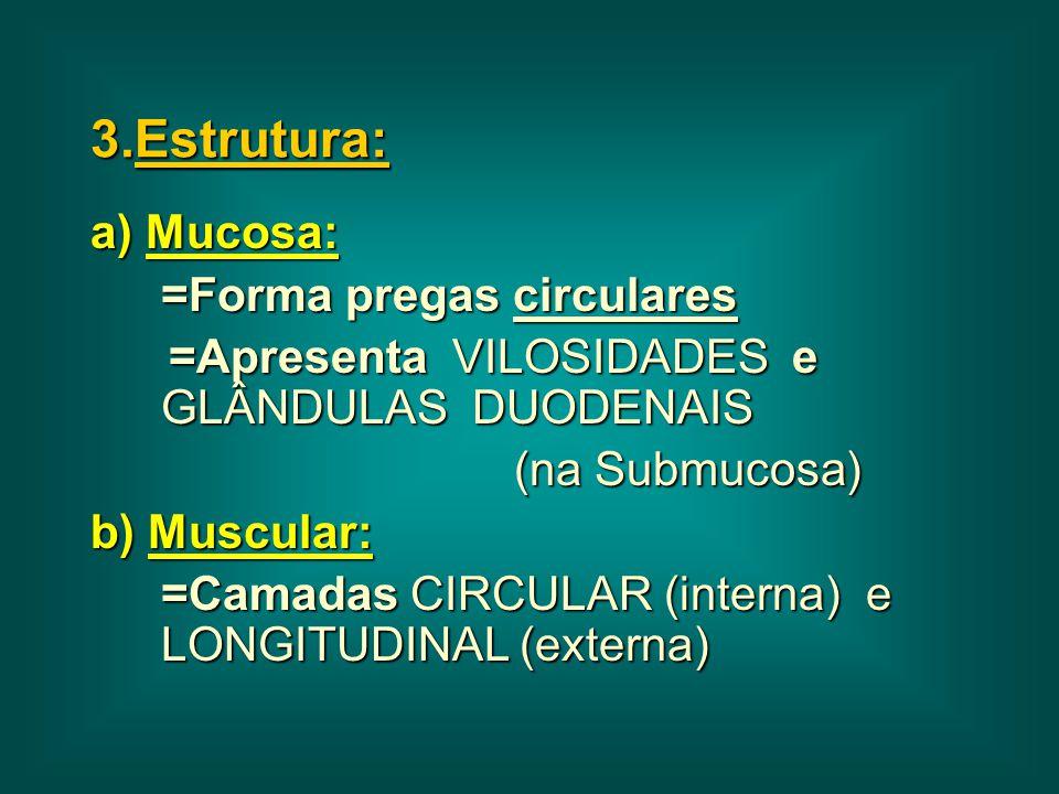 3.Estrutura: a) Mucosa: =Forma pregas circulares