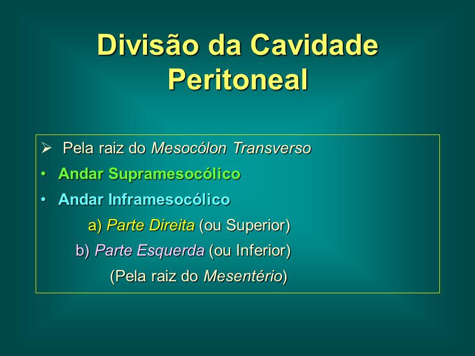 Divisão da Cavidade Peritoneal
