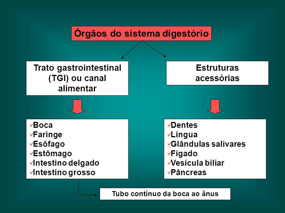 Órgãos do sistema digestório