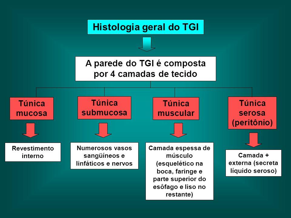 Histologia geral do TGI