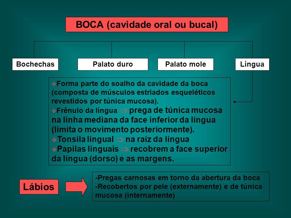 BOCA (cavidade oral ou bucal)