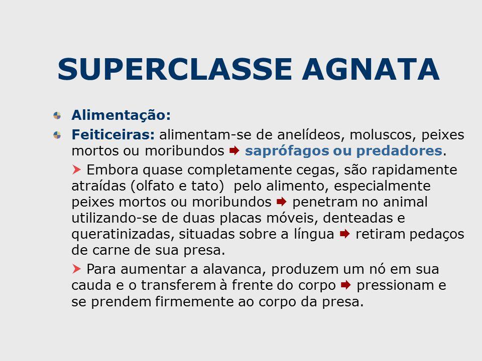 SUPERCLASSE AGNATA Alimentação: