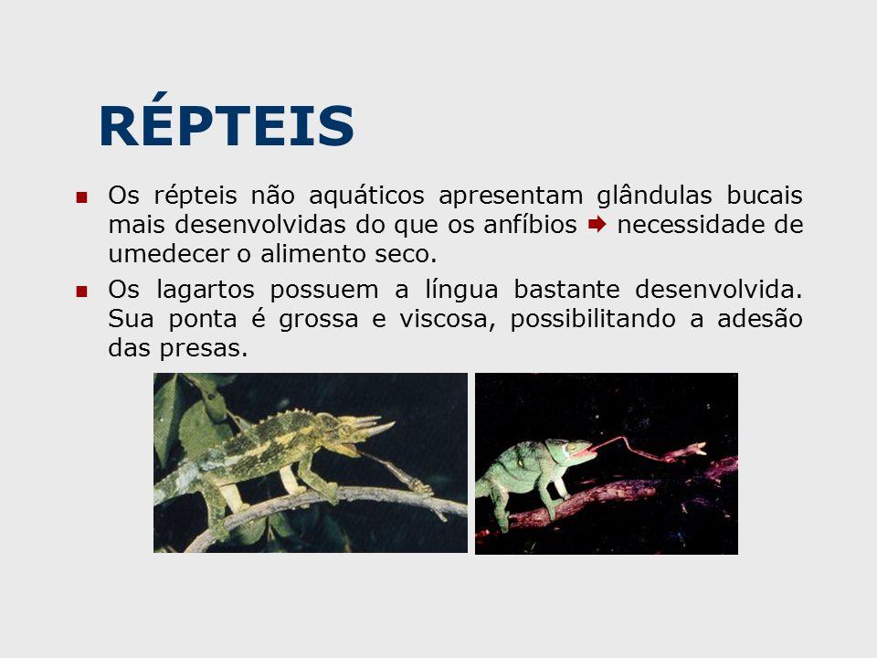 RÉPTEIS Os répteis não aquáticos apresentam glândulas bucais mais desenvolvidas do que os anfíbios  necessidade de umedecer o alimento seco.