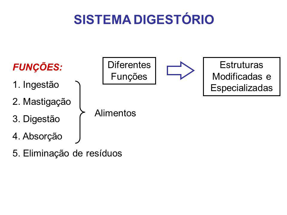 Estruturas Modificadas e Especializadas