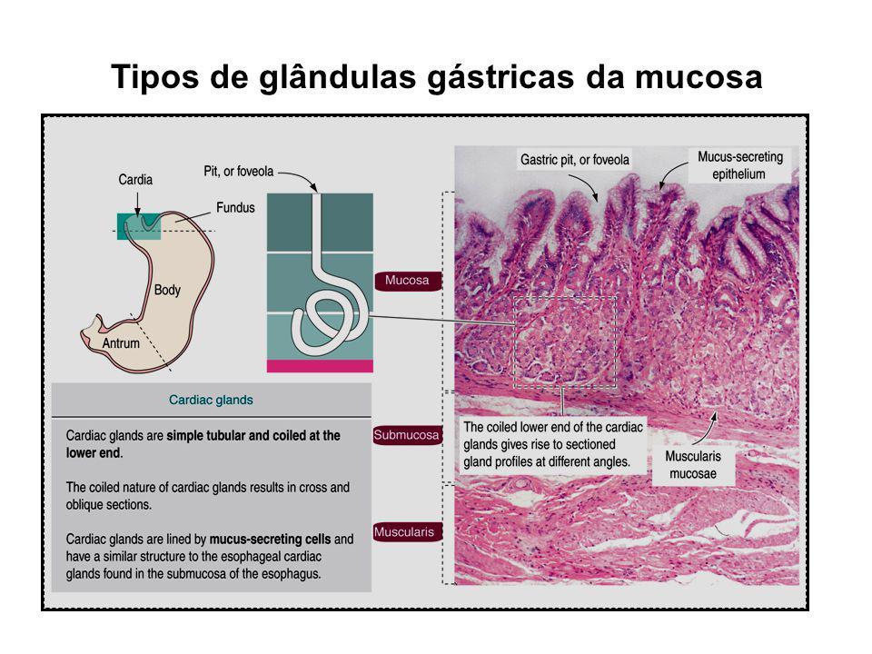 Tipos de glândulas gástricas da mucosa