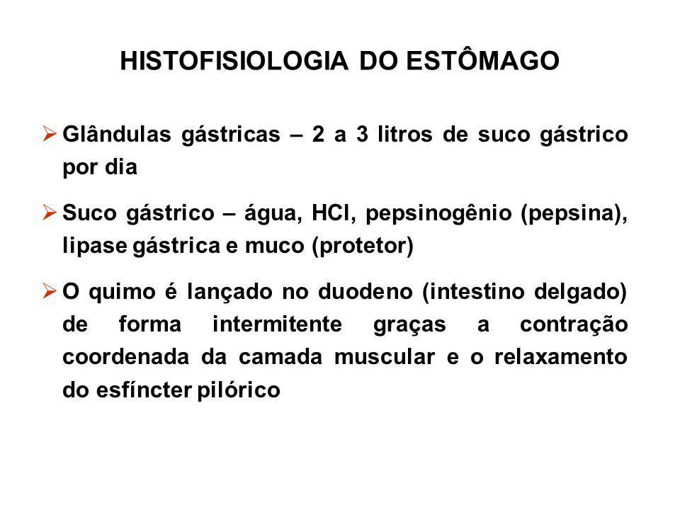 HISTOFISIOLOGIA DO ESTÔMAGO