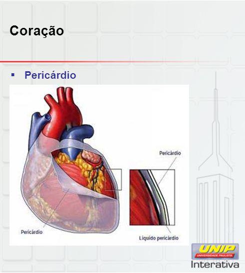 Coração Pericárdio