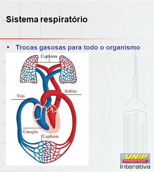 Sistema respiratório Trocas gasosas para todo o organismo