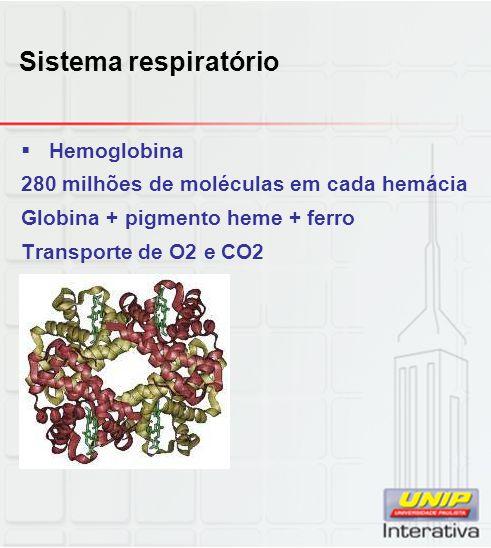 Sistema respiratório Hemoglobina