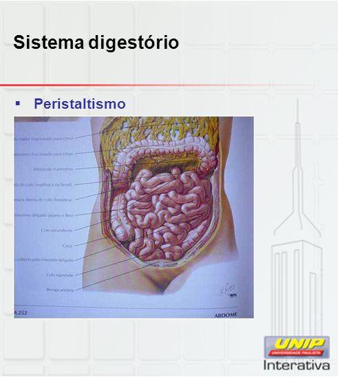 Sistema digestório Peristaltismo