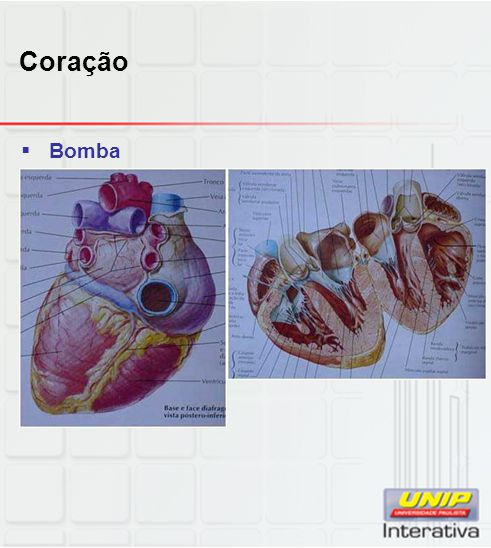 Coração Bomba
