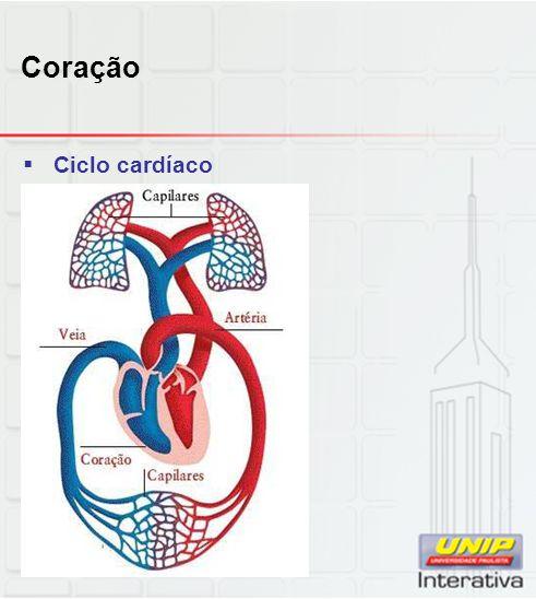 Coração Ciclo cardíaco