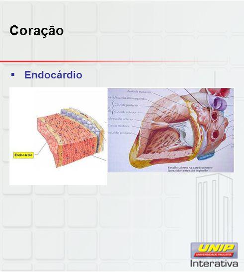 Coração Endocárdio