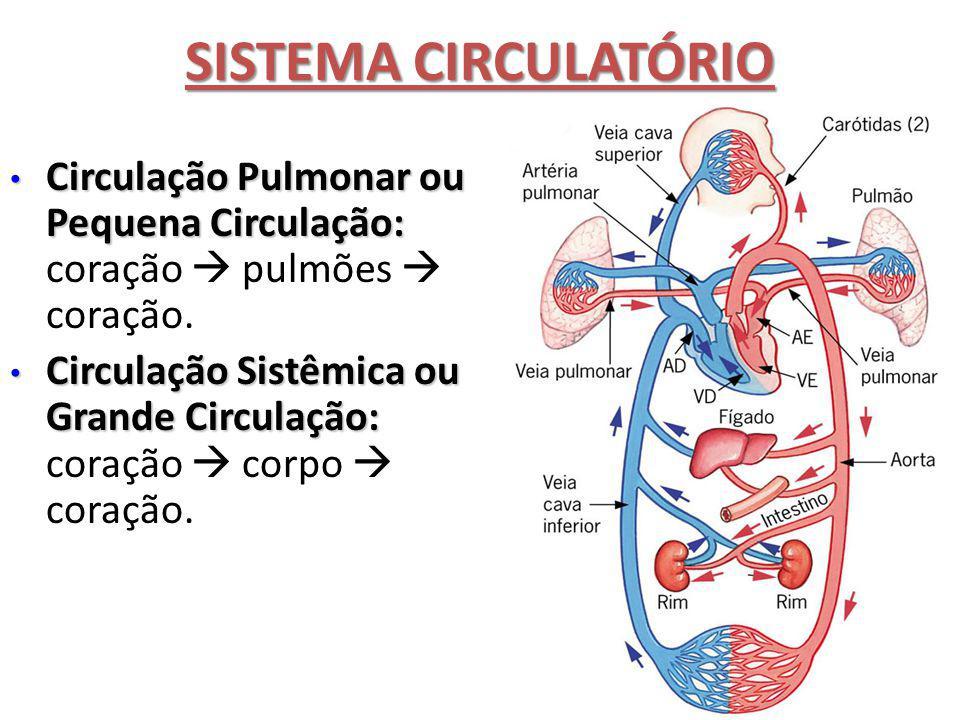 SISTEMA CIRCULATÓRIO Circulação Pulmonar ou Pequena Circulação: coração  pulmões  coração.