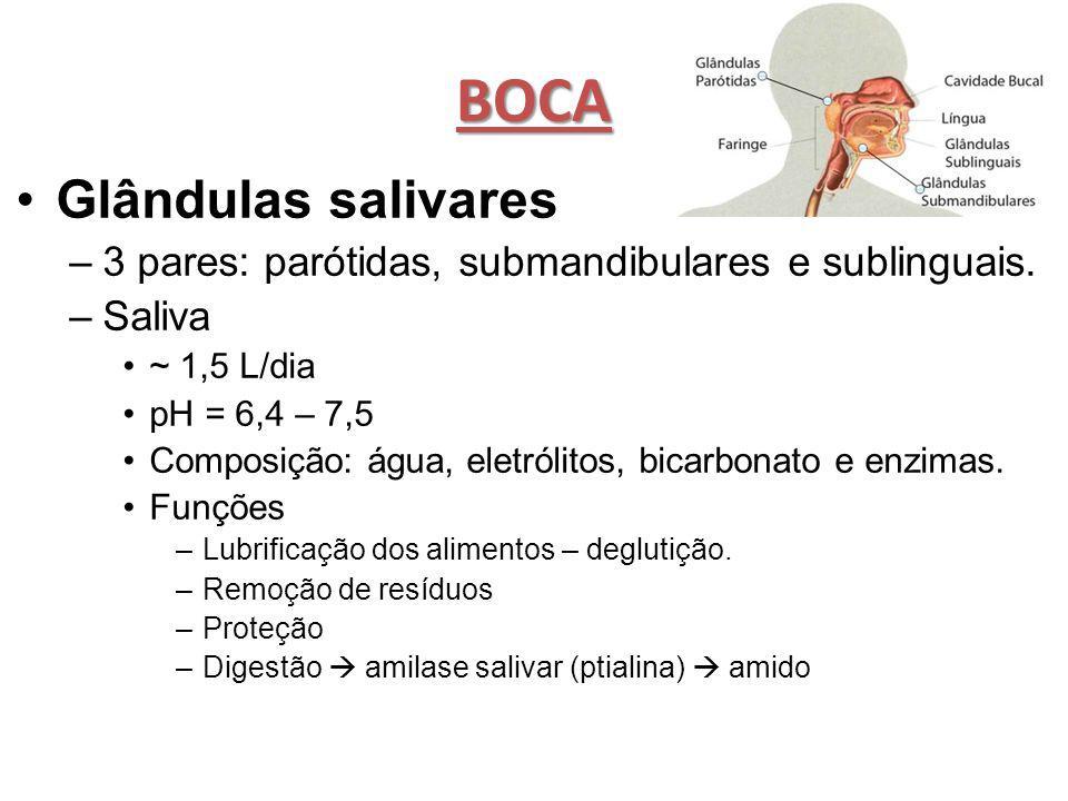 BOCA Glândulas salivares