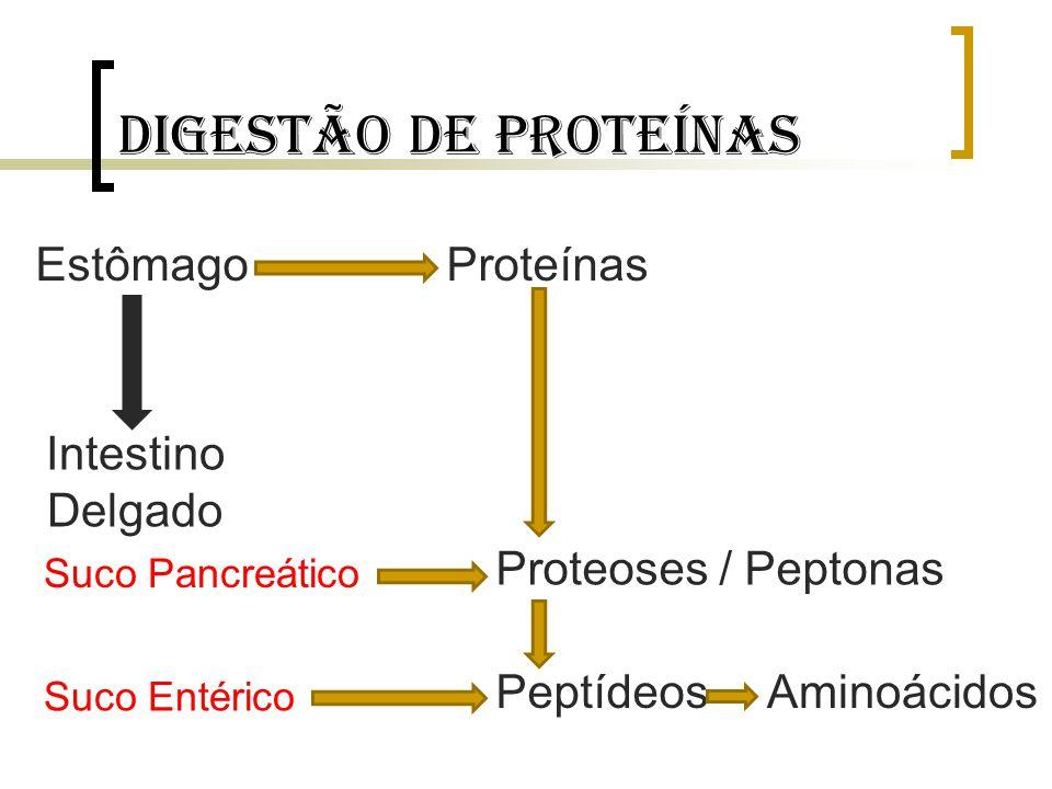 Digestão de proteínas Estômago Proteínas Intestino Delgado