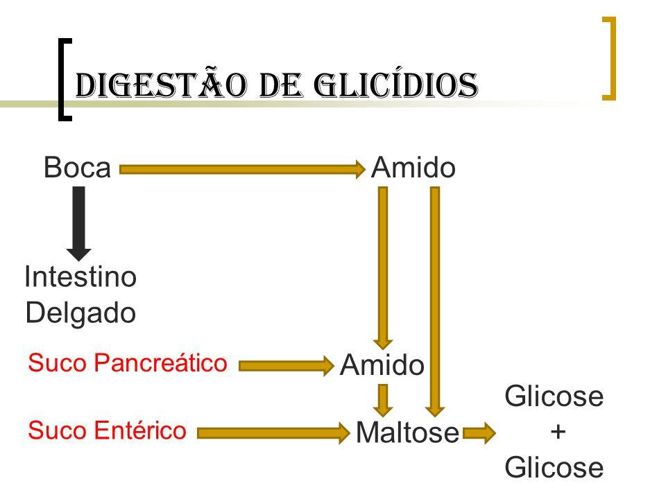 Digestão de glicídios Boca Amido Intestino Delgado Amido Glicose +