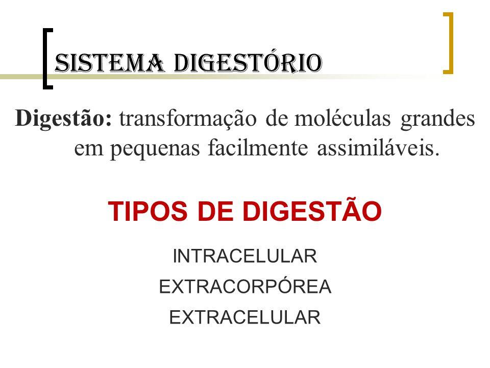 Sistema digestório TIPOS DE DIGESTÃO