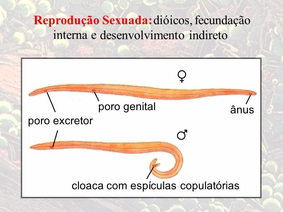 ♀ ♂ Reprodução Sexuada: dióicos, fecundação interna e