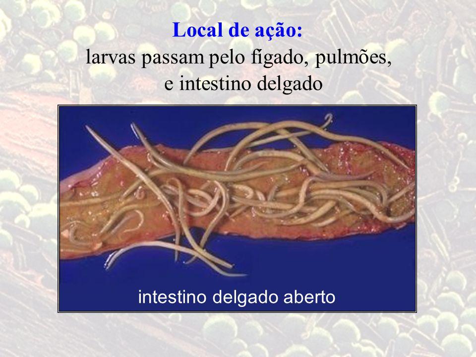 intestino delgado aberto