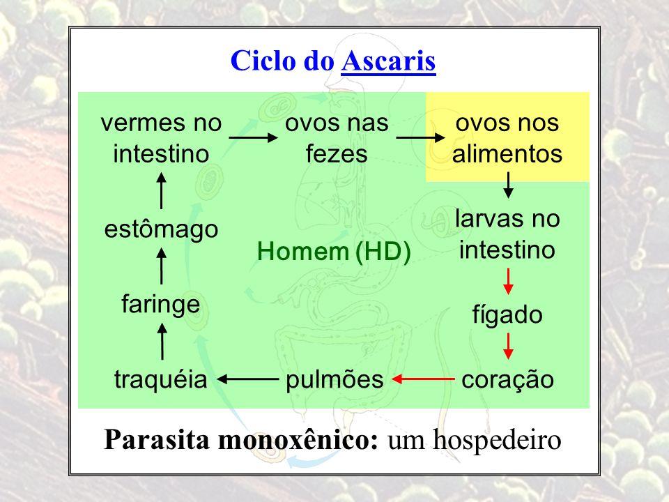 Ciclo do Ascaris Parasita monoxênico: um hospedeiro vermes no