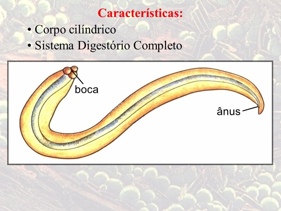 Sistema Digestório Completo