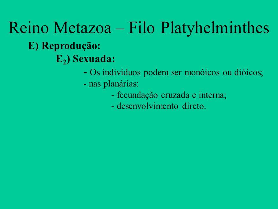 Reino Metazoa – Filo Platyhelminthes