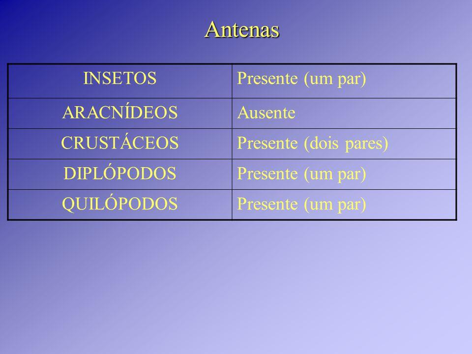Antenas INSETOS Presente (um par) ARACNÍDEOS Ausente CRUSTÁCEOS