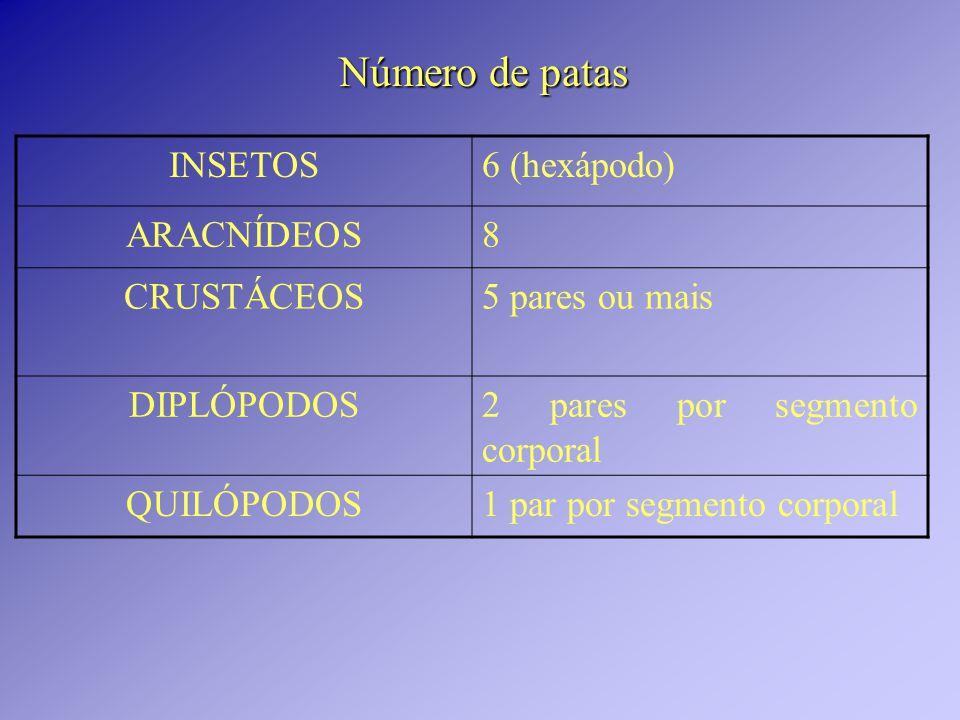 Número de patas INSETOS 6 (hexápodo) ARACNÍDEOS 8 CRUSTÁCEOS